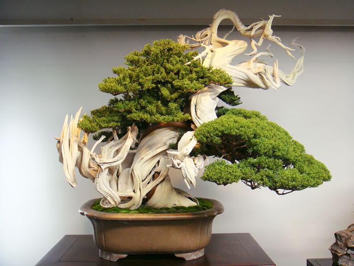 iskusstvo bonsay foto 2