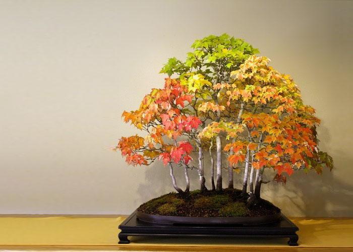 iskusstvo bonsay foto 21