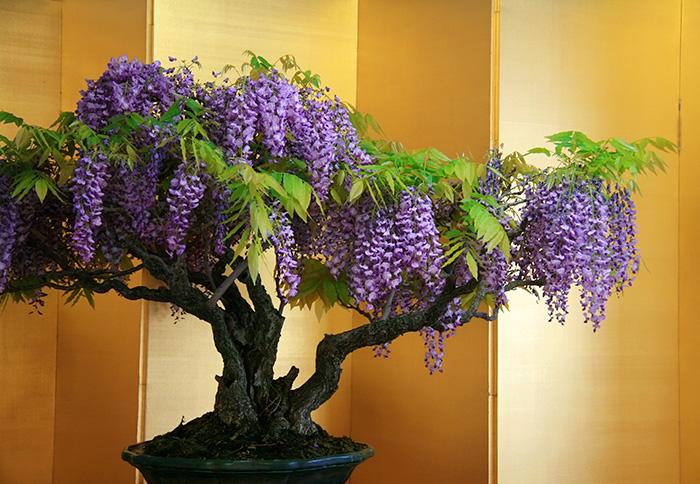 iskusstvo bonsay foto 26