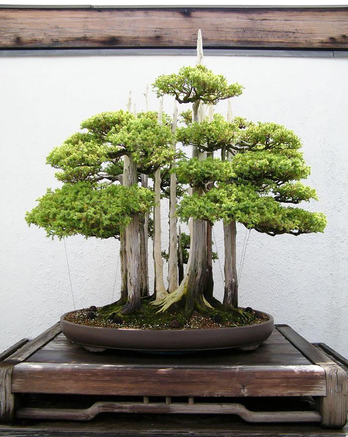 iskusstvo bonsay foto 5