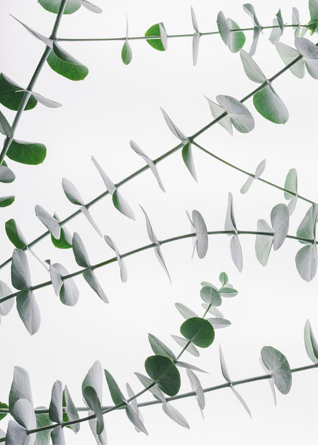 fotografii s zelenym tsvetom 4