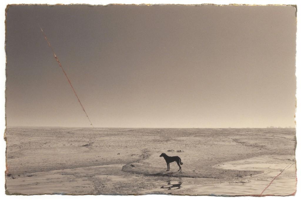 года масао ямамото фото пример