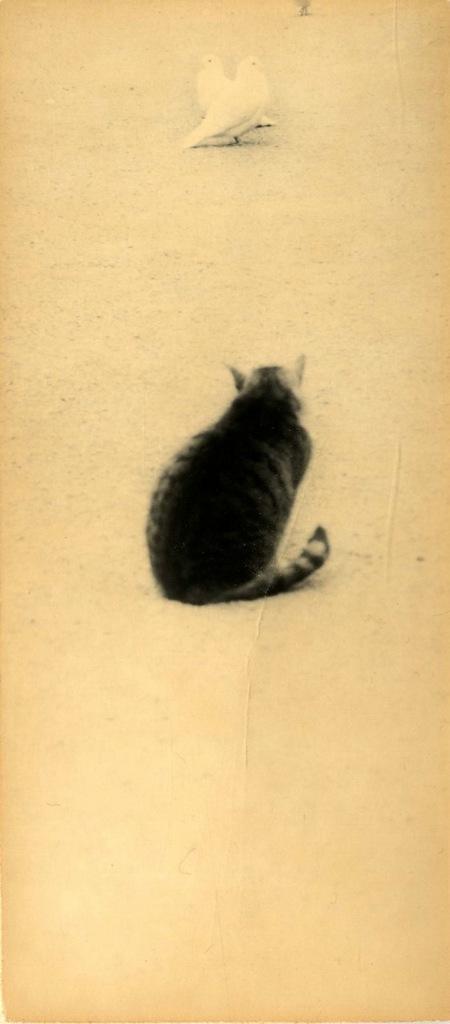 минимализм в фотографиях Масао Ямамото 12