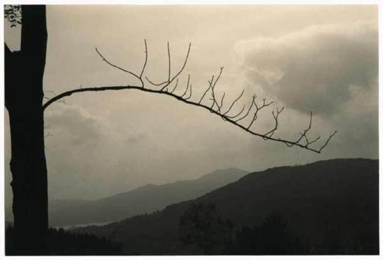минимализм в фотографиях Масао Ямамото 19