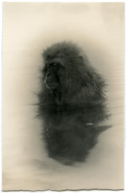минимализм в фотографиях Масао Ямамото 2