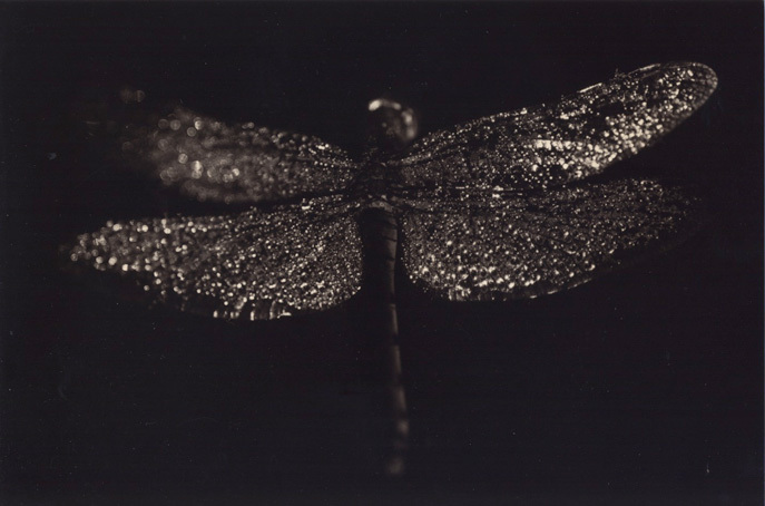 минимализм в фотографиях Масао Ямамото 29
