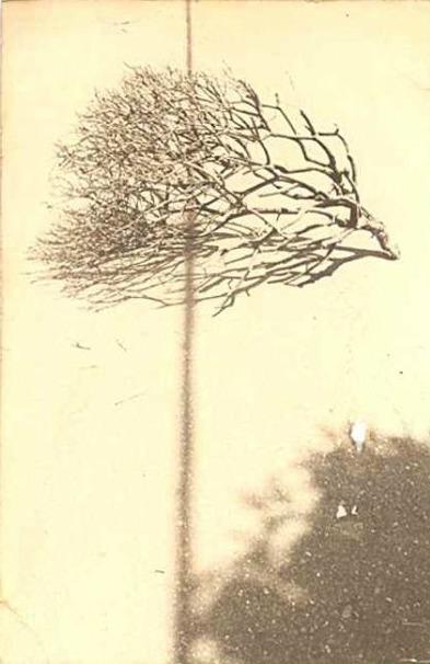 минимализм в фотографиях Масао Ямамото 36