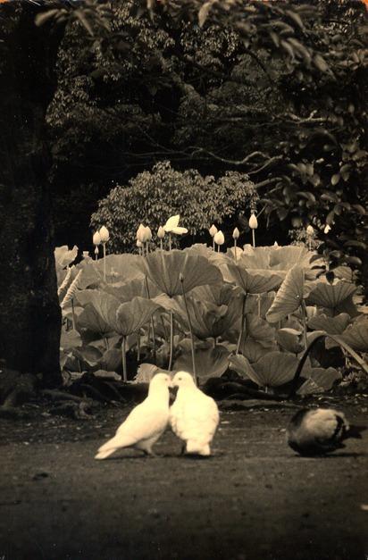 минимализм в фотографиях Масао Ямамото 41