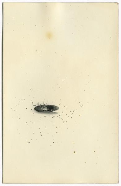 минимализм в фотографиях Масао Ямамото 5