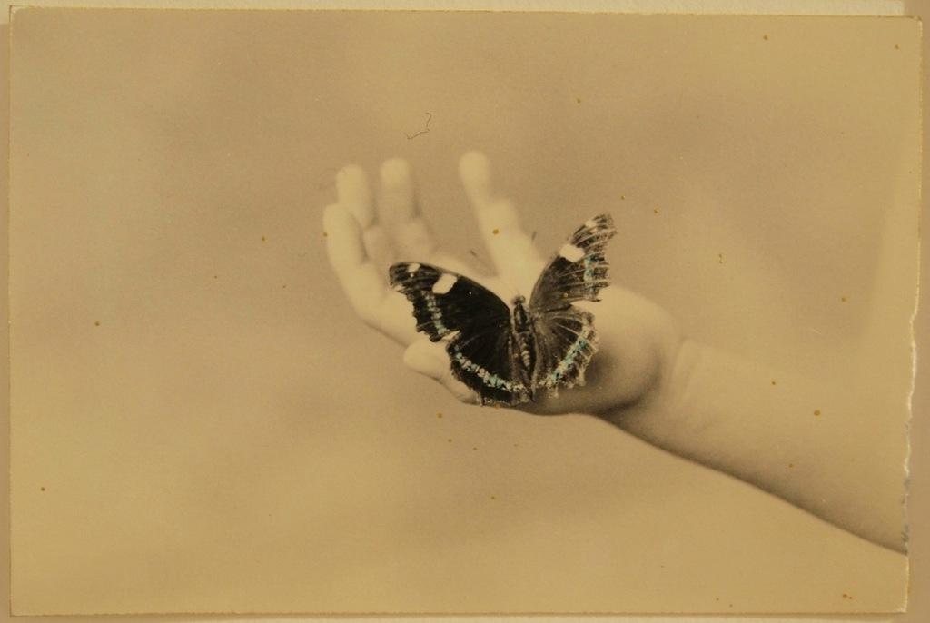 минимализм в фотографиях Масао Ямамото 7