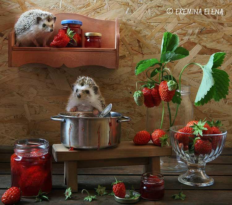 Ёжики. Фотограф Елена Еремина 27