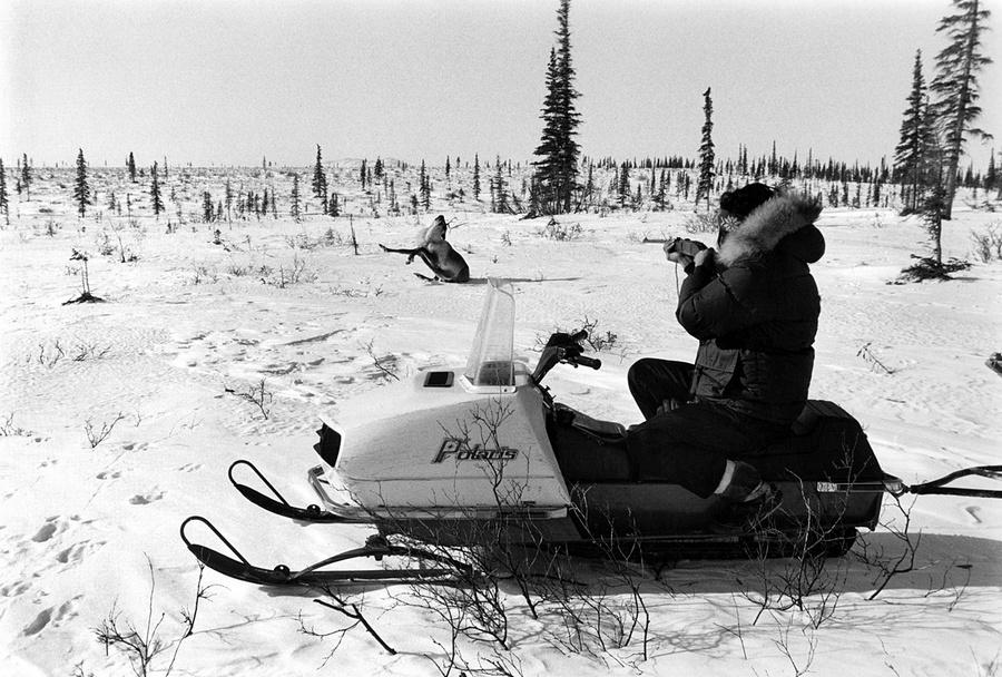 Жизнь в эскимосских деревнях Аляски. Фотограф Алекс Харрис  26