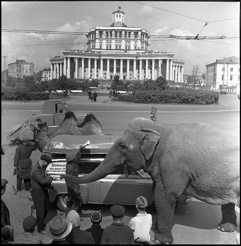 Советские фотографии Эрвина Волкова 29
