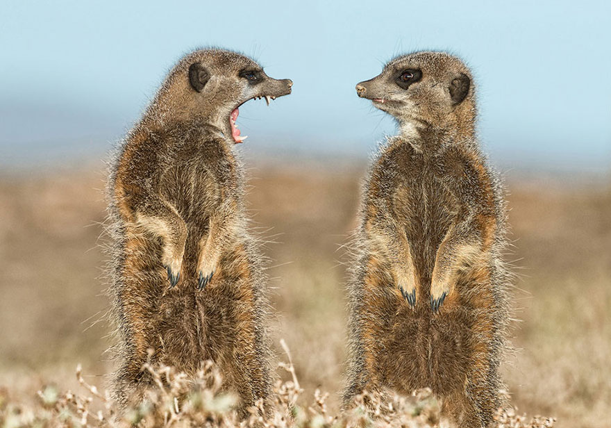 фото диких животных прикольные кожаные детали сторону