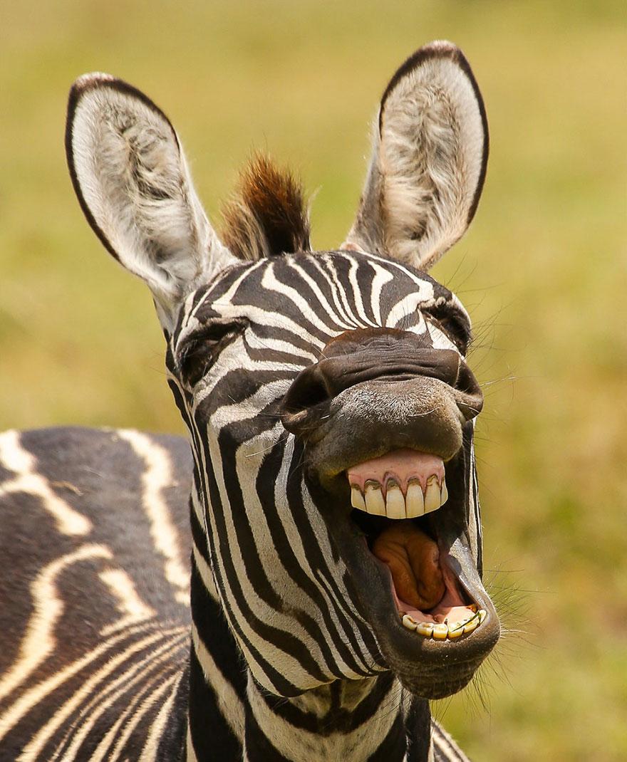 Красивые картинки животные смешные