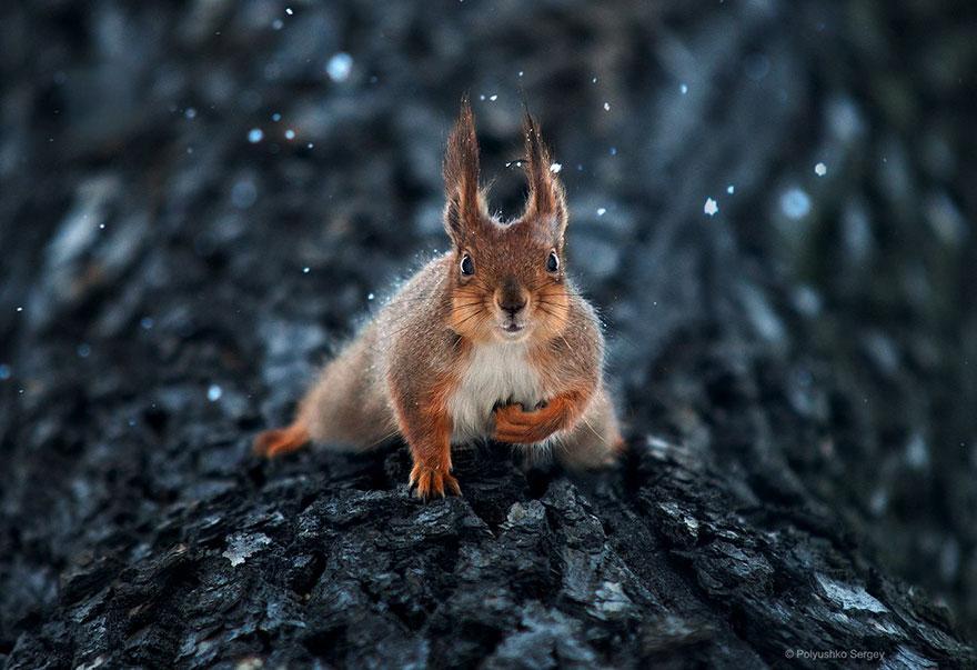 портреты животных фотографа Сергея Полюшко 10