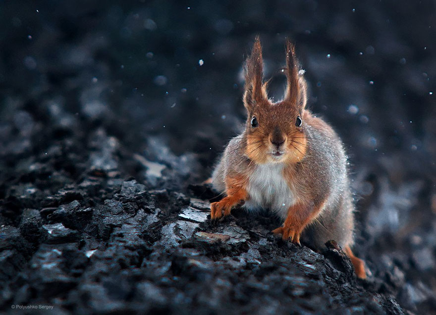 портреты животных фотографа Сергея Полюшко 12