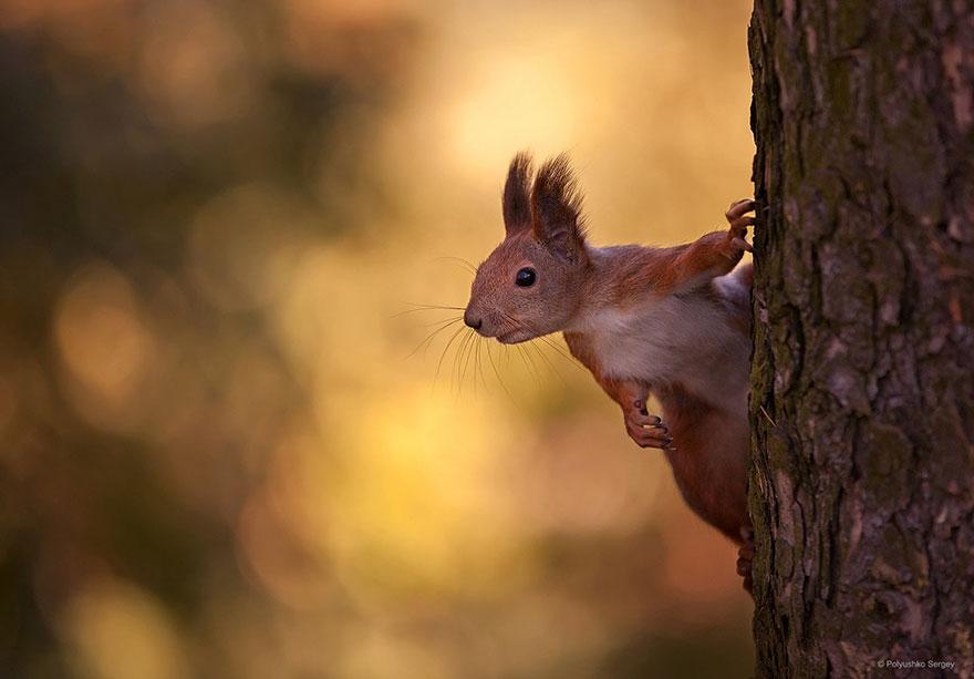 портреты животных фотографа Сергея Полюшко 14