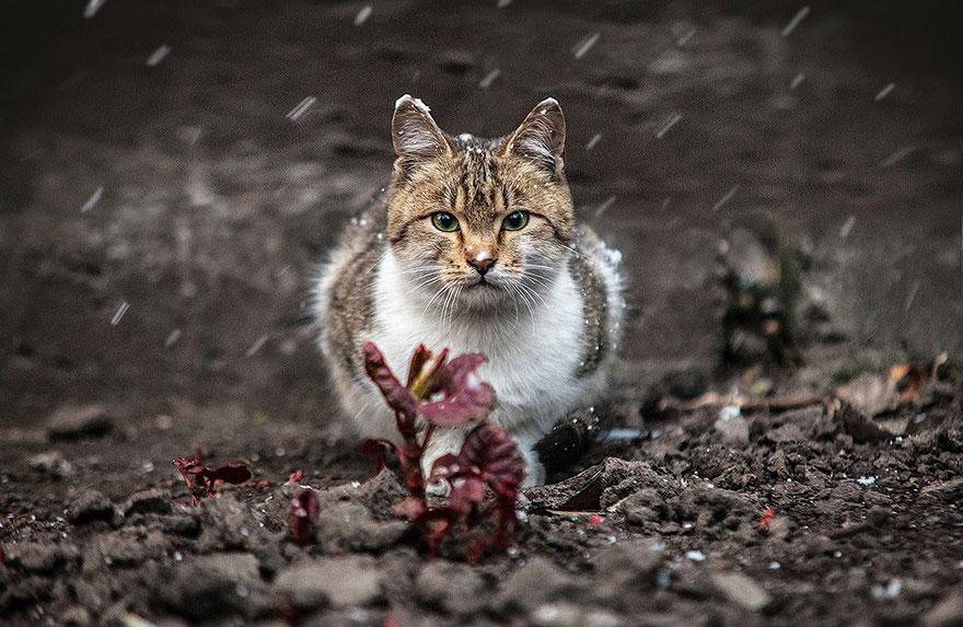 портреты животных фотографа Сергея Полюшко 16