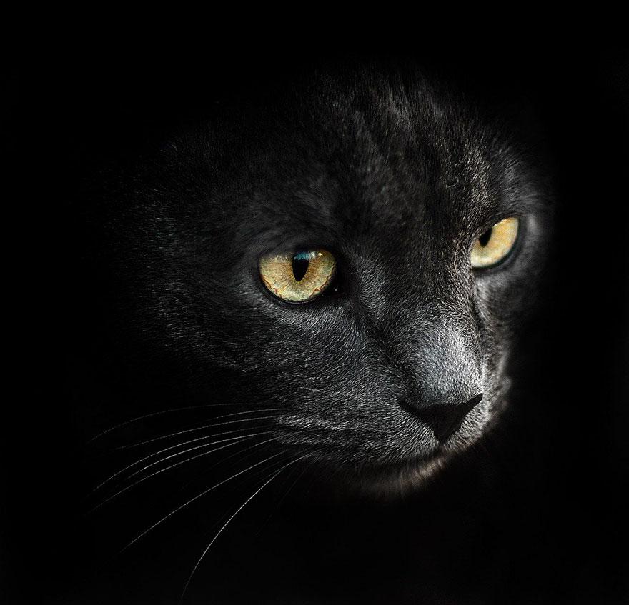 портреты животных фотографа Сергея Полюшко 17