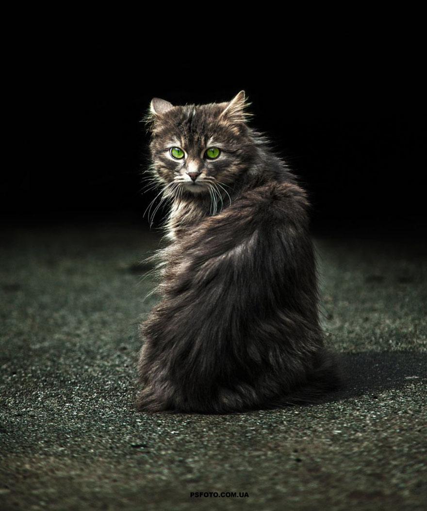 портреты животных фотографа Сергея Полюшко 19