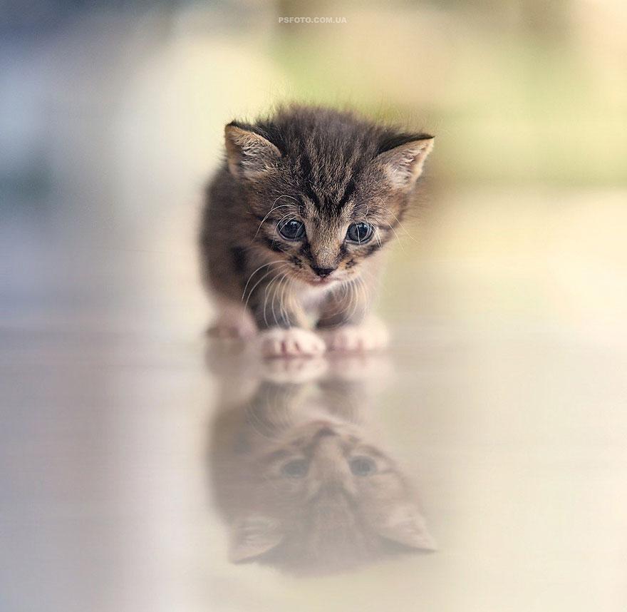 портреты животных фотографа Сергея Полюшко 20