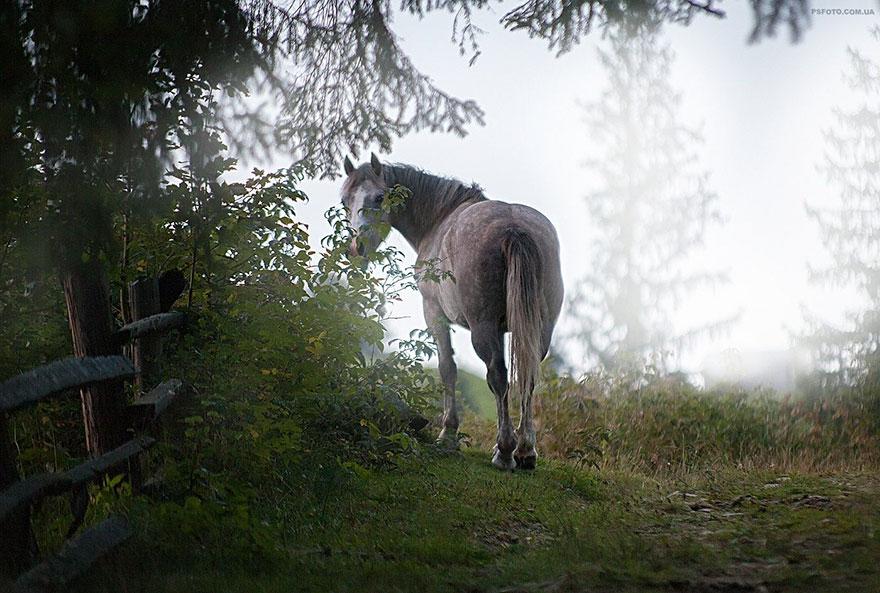 портреты животных фотографа Сергея Полюшко 26