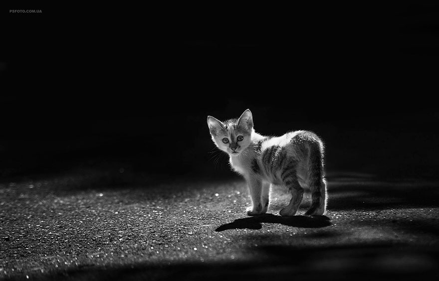 портреты животных фотографа Сергея Полюшко 27