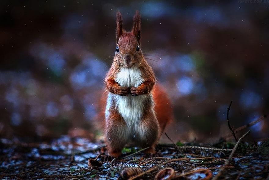 портреты животных фотографа Сергея Полюшко 32
