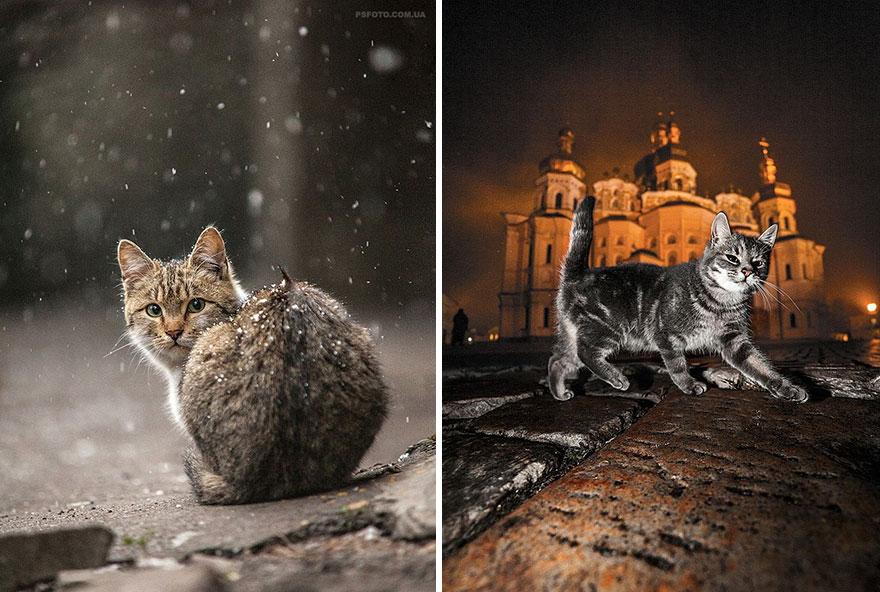 портреты животных фотографа Сергея Полюшко 34