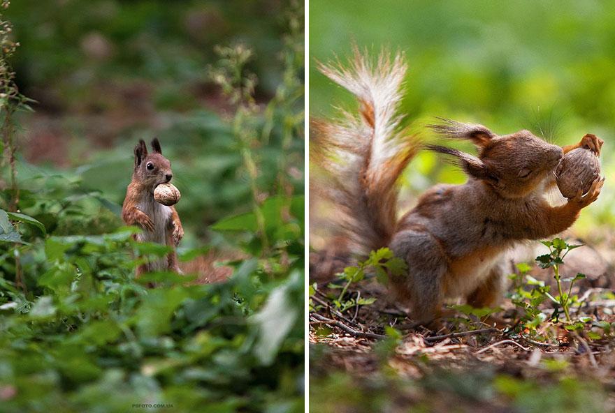 портреты животных фотографа Сергея Полюшко 35