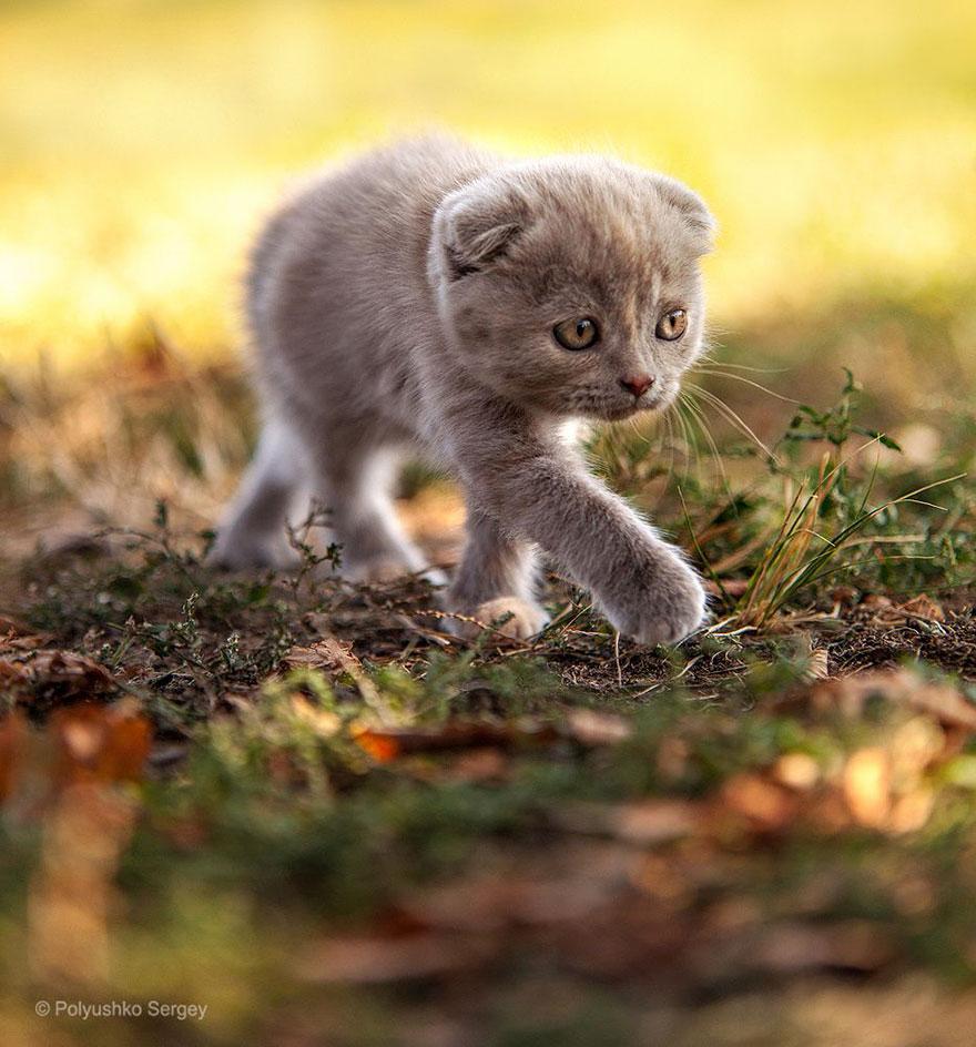 портреты животных фотографа Сергея Полюшко 5