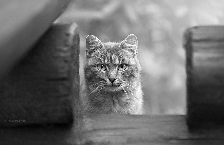 портреты животных фотографа Сергея Полюшко 6