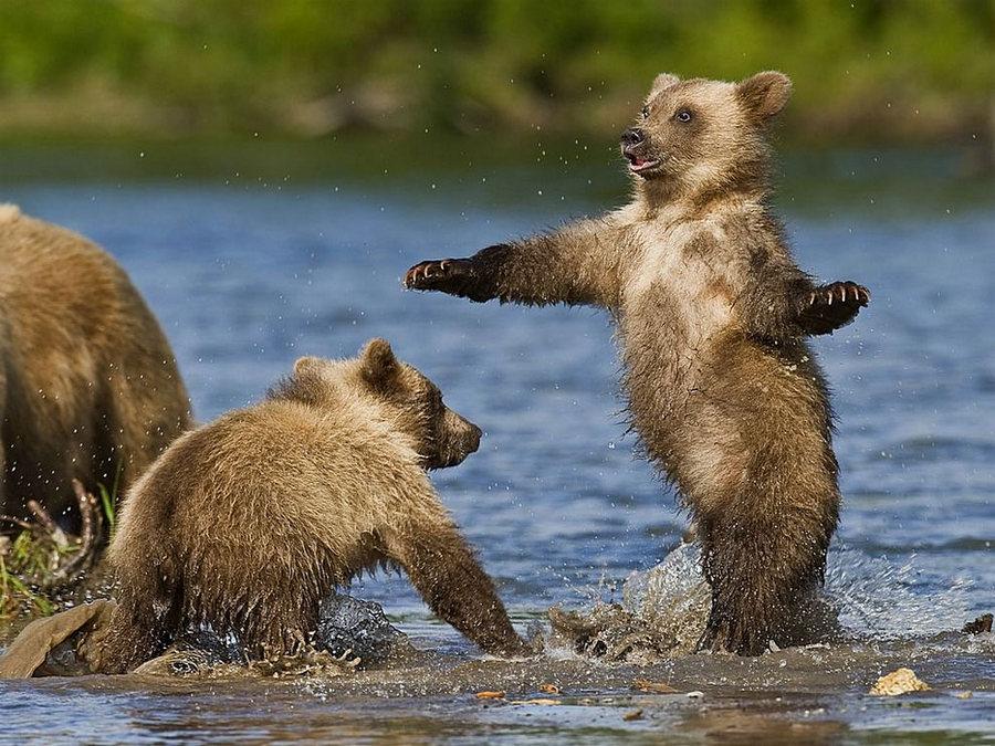 Смешные картинки о медведях
