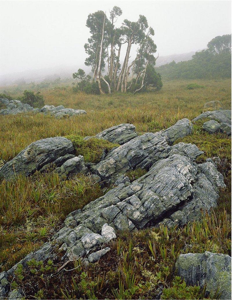 Первобытная красота Тасмании в пейзажных фотографиях Питера Домбровскиса  10