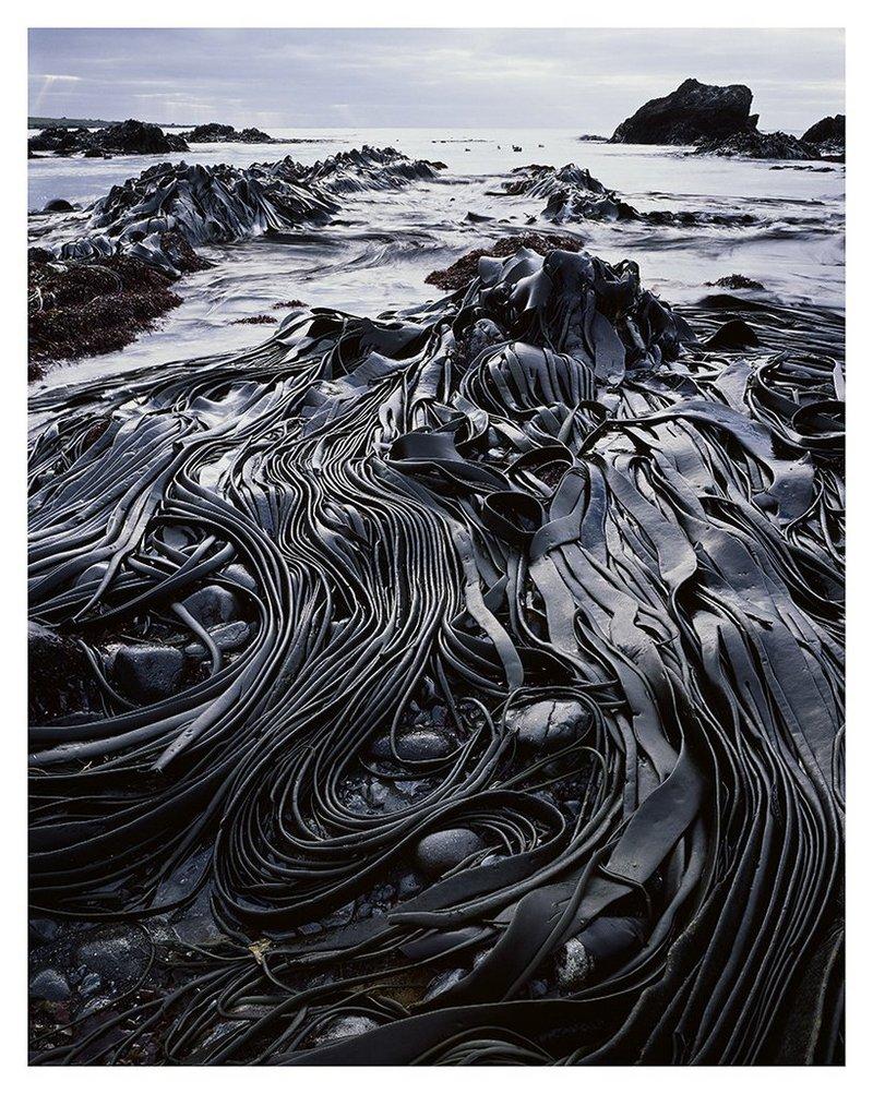 Первобытная красота Тасмании в пейзажных фотографиях Питера Домбровскиса  15