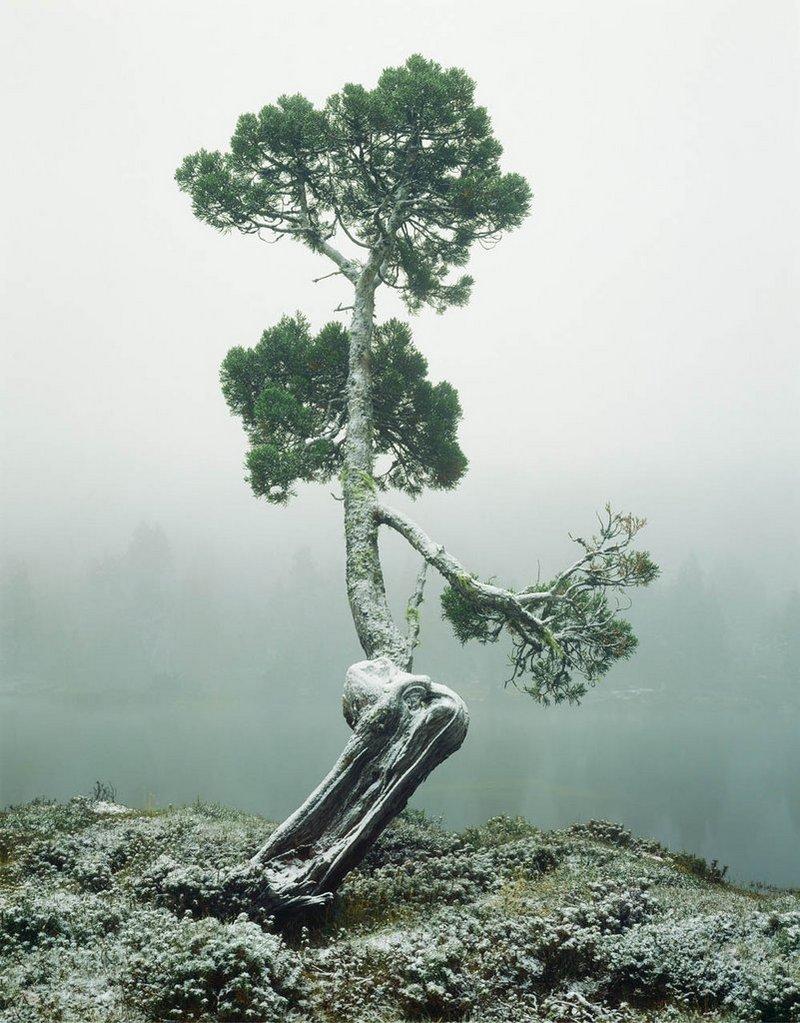 Первобытная красота Тасмании в пейзажных фотографиях Питера Домбровскиса  17