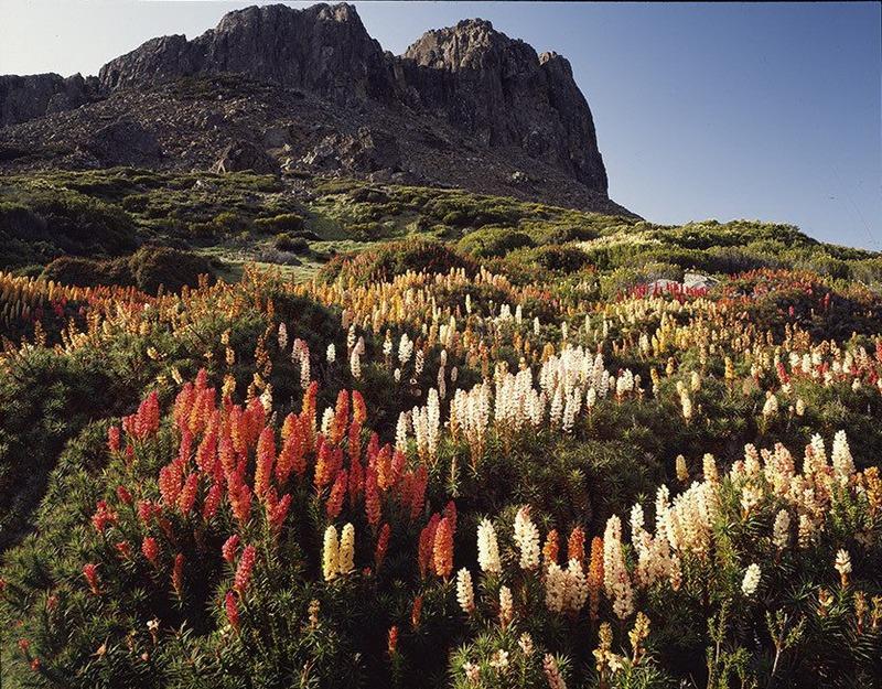 Первобытная красота Тасмании в пейзажных фотографиях Питера Домбровскиса  2
