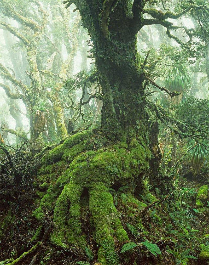 Первобытная красота Тасмании в пейзажных фотографиях Питера Домбровскиса  3
