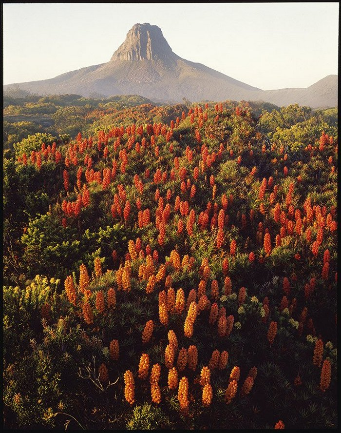 Первобытная красота Тасмании в пейзажных фотографиях Питера Домбровскиса  5