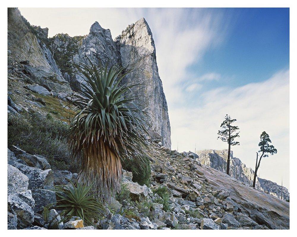 Первобытная красота Тасмании в пейзажных фотографиях Питера Домбровскиса  6