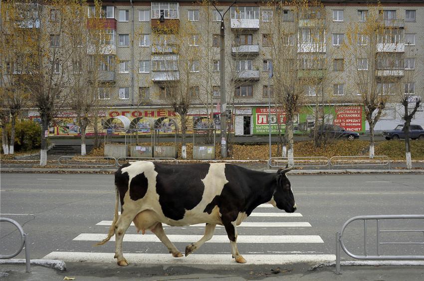 уличные фотографии Александра Петросяна 68