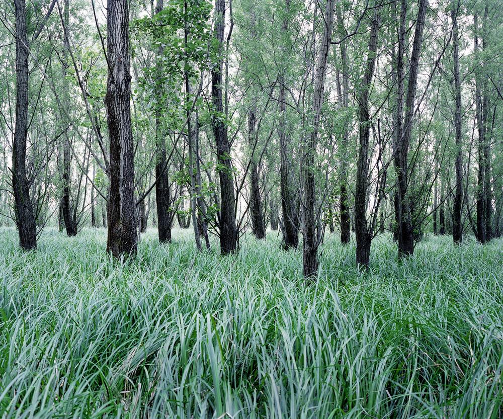«Зелёная тишина». Фотограф Даниэль Коваловский 12