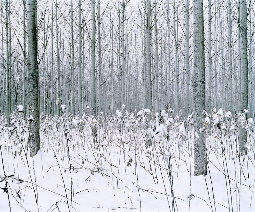 «Зелёная тишина». Фотограф Даниэль Коваловский 14