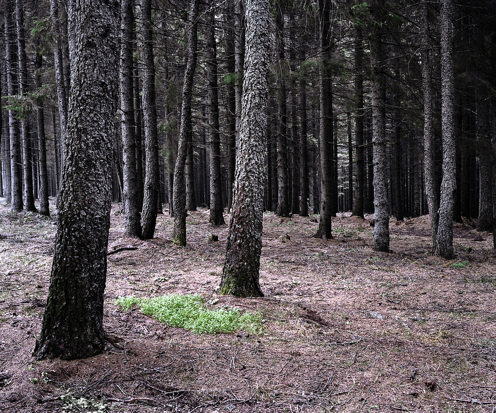 «Зелёная тишина». Фотограф Даниэль Коваловский 16