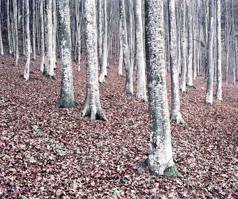 «Зелёная тишина». Фотограф Даниэль Коваловский 17