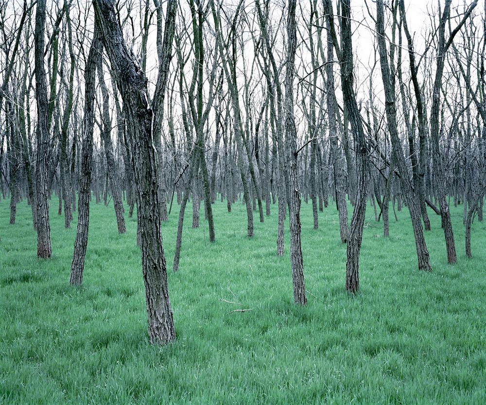 «Зелёная тишина». Фотограф Даниэль Коваловский 3