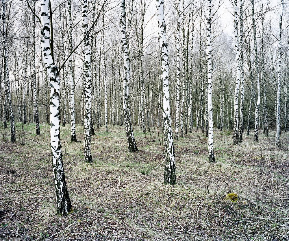«Зелёная тишина». Фотограф Даниэль Коваловский 4