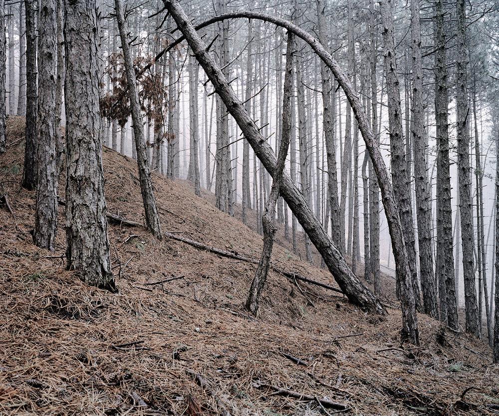 «Зелёная тишина». Фотограф Даниэль Коваловский 5