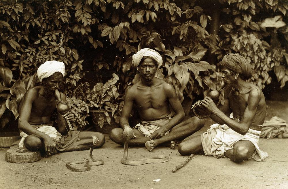 Редчайшие фотографии о повседневной жизни Шри-Ланки в 1880-х годах 14